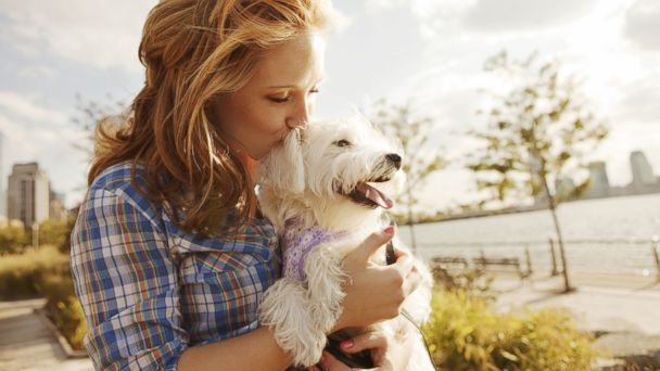 Pets Can Improve Your Health Effectively