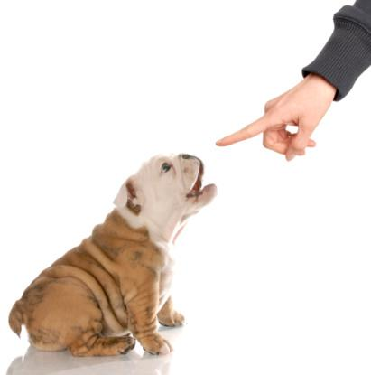 Training For Puppy: Ways To Get Dogs to Stop Barking