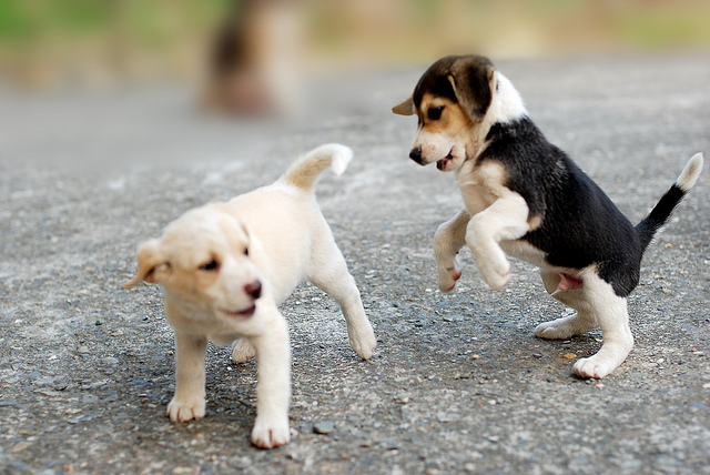 Puppy Traning: Playtime for Your Dog - Keep Your Dog Happy and Healthy