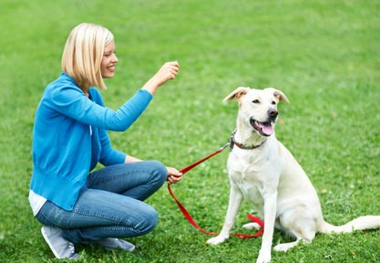 Basic Dog Training You Must Teach Your Dogs