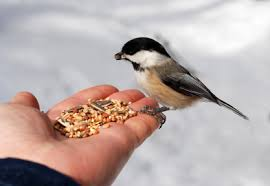 Bird Feeding Tips - Bird Food - Bird  Nutrition