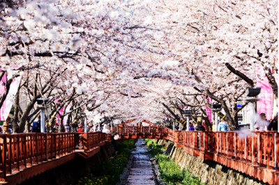 Jinhae in Korea