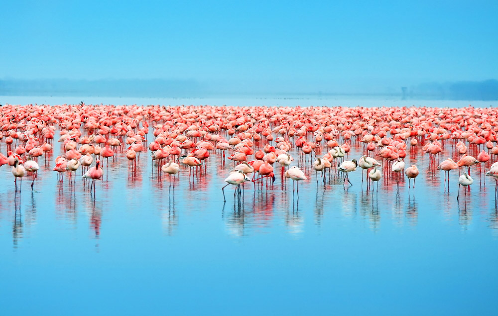 Lake Nakuru in Kenya