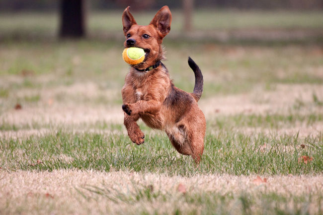 Puppy Traning: Playtime for Your Dog