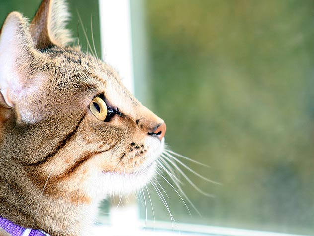 Indoor vs Outdoor Cat ? What Is Good For Your Kitty?