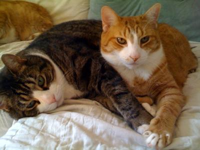 Making Cat Happyly: Caring For Indoor Cats