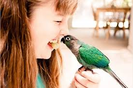 Adopt A Bird: Ways To Help You Choose a Pet Bird