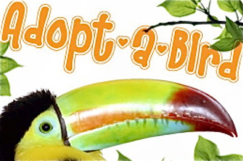 Bird Adoption: Are You Ready To Adopt a Pet Bird?